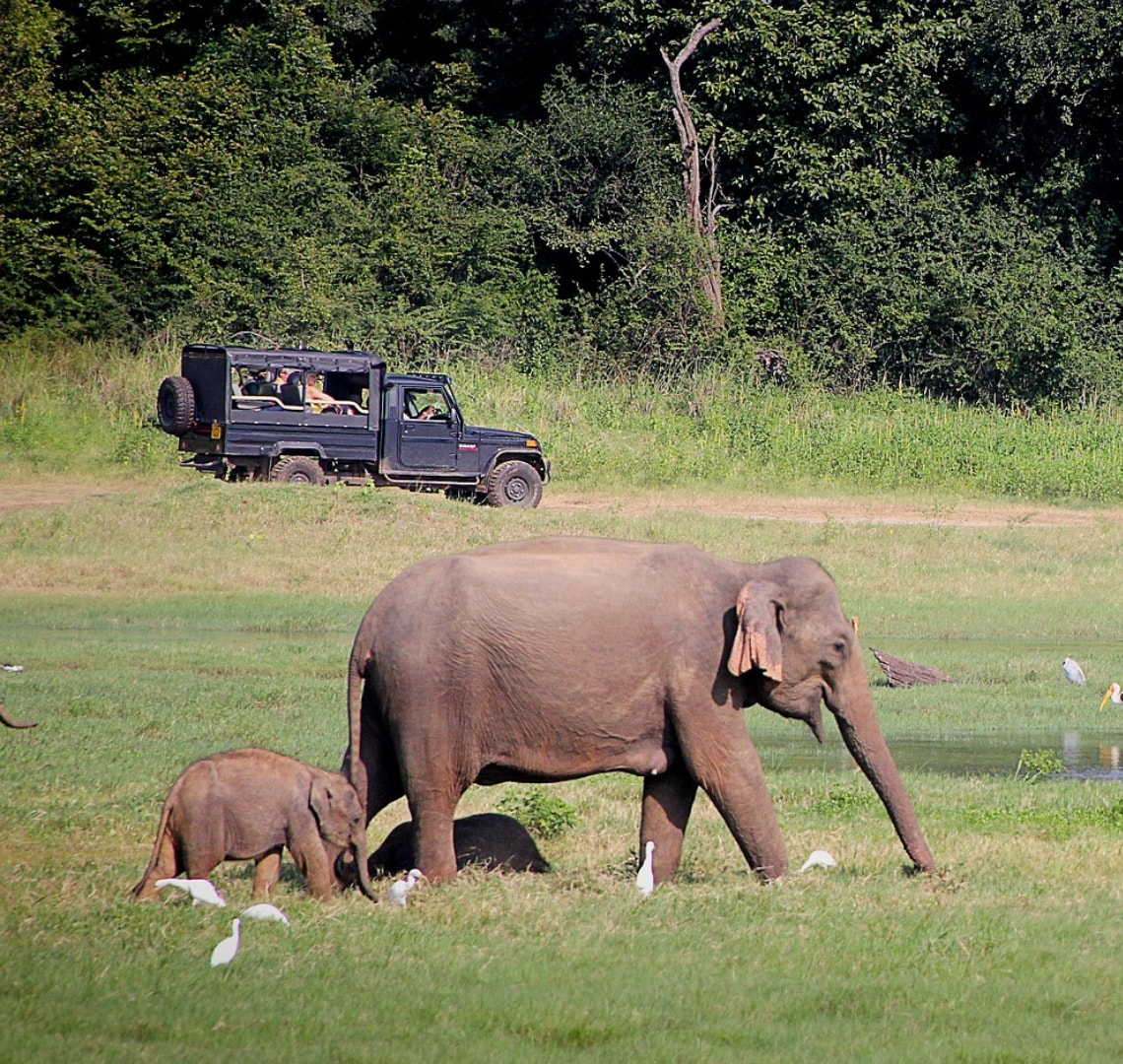Namibia Reading - A mother elephant and her baby walking lush green grass while there is a safari jeep in the background
