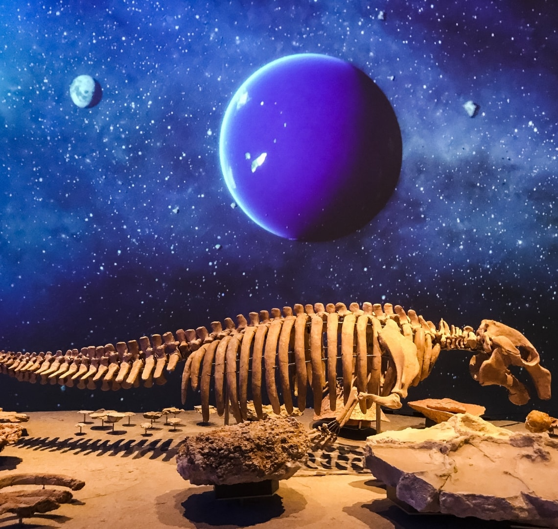 National Museum of Qatar - A dugong skeleton in front of an impressive digital visual display