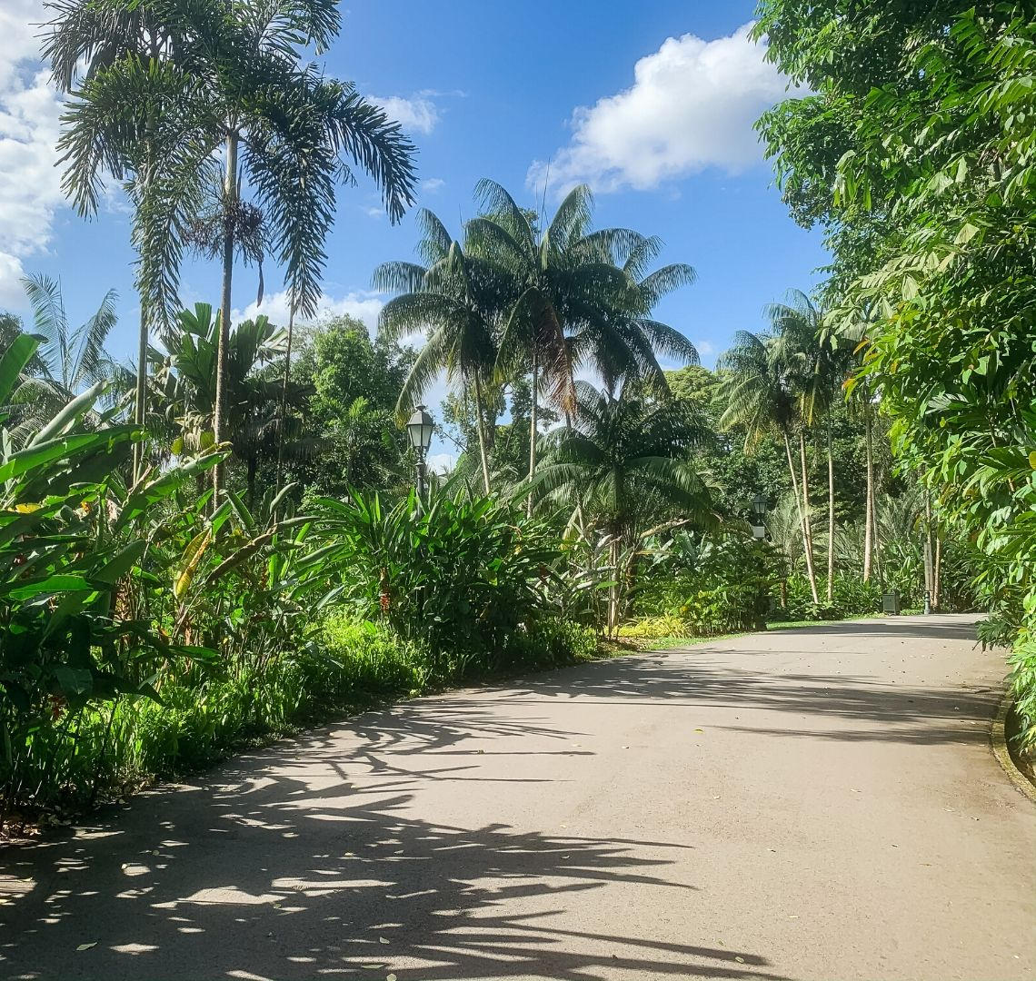 The Expat Bubble - A paved road in Singapore Botanic Gardens curving round to the right. There are lots of palm trees and green tropical plants, the sky is blue with a few clouds in the sky.