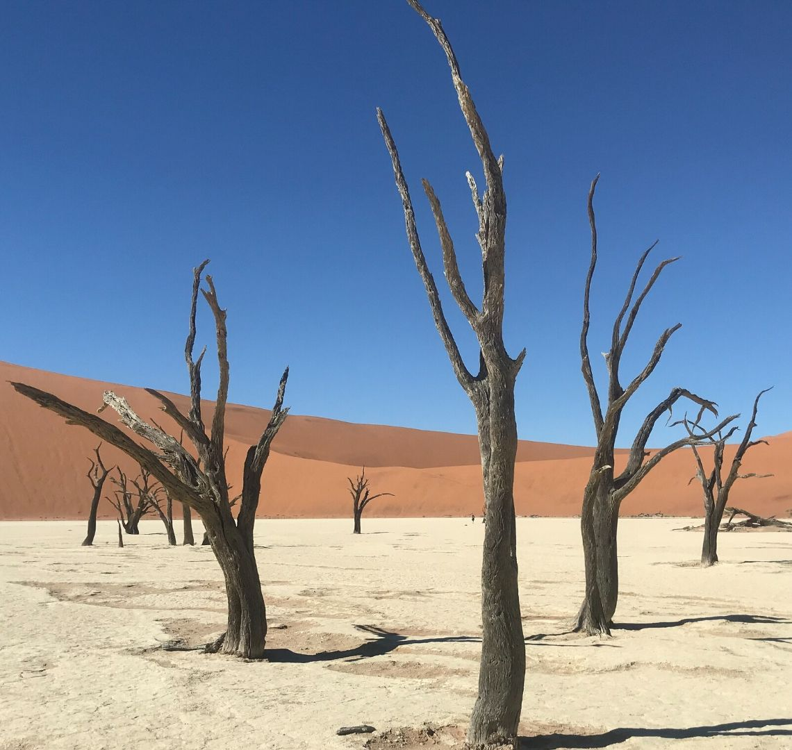 2 Week Namibia Itinerary - visiting Dead Vlei is a MUST! The trees are almost black as a stark contrast to the white salt pan, red sand dunes and bright blue sky