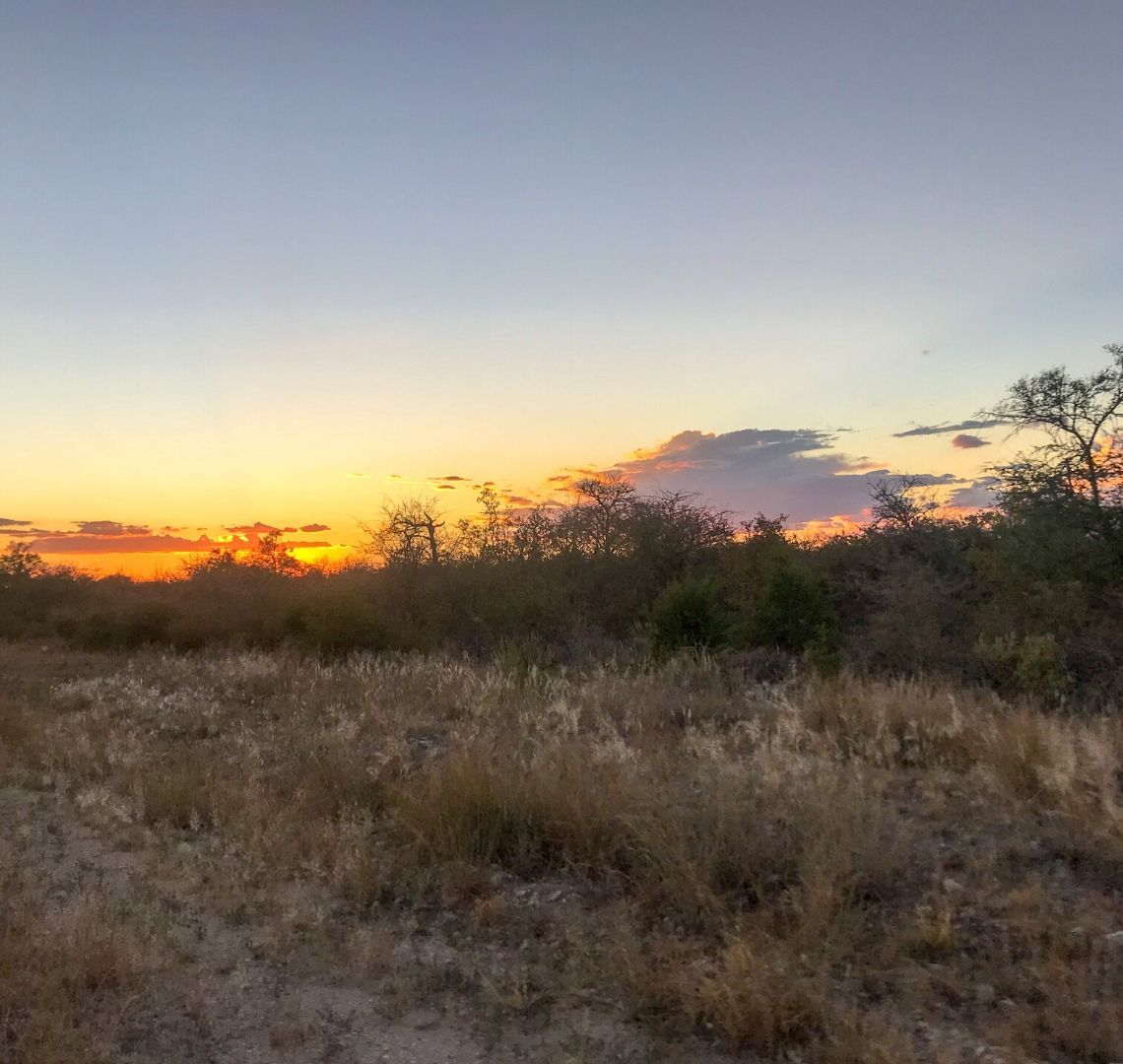 2 Week Namibia Itinerary - sunset over the brush in Etosha. The sun has just disappeared behind the vegetation and there are a few clouds in the sky.