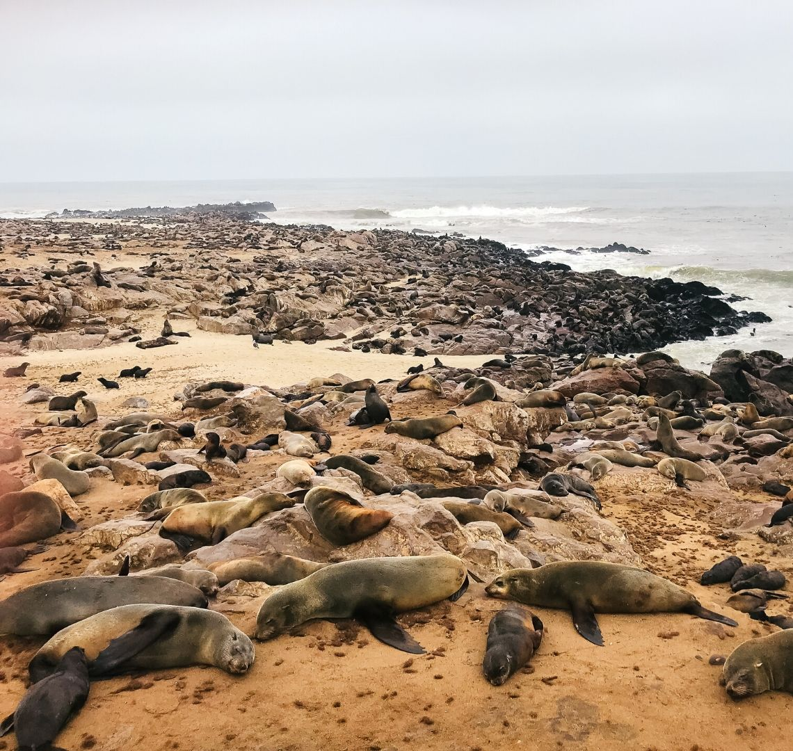 Just a few of the 100,000 seals that are part of the Cape Cross colony. They are lying next to and on top of each other on rocks and sand right by the water's edge.