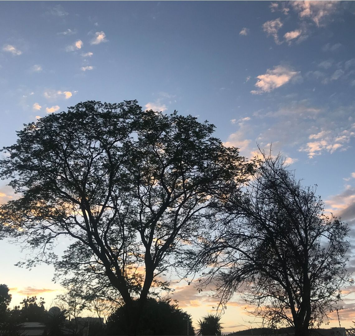 2 Week Namibia Itinerary - sunrise through the trees in Windhoek on our first morning in Namibia. The sky is a combination of watery blues with a touch of purple and pale yellows and oranges. There are the black silhouettes of trees in the foreground.