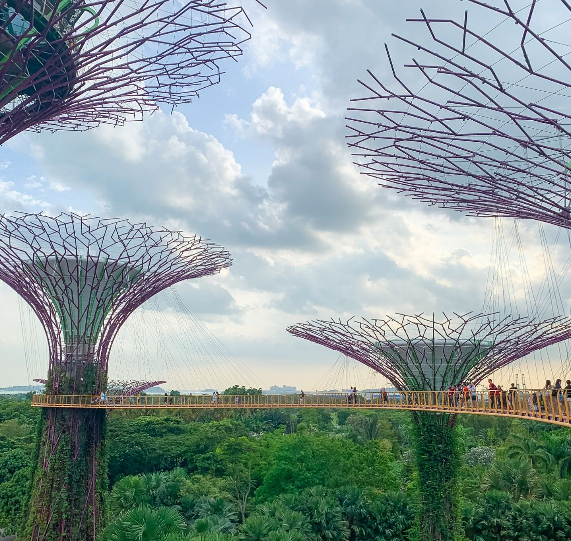 """Gardens By The Bay With Kids - a view of one end of the yellow bridge that is the superstrees skywalk, The there are 4 trees in view to varying degrees with their green middles and purple """"branches). There are quite a few people n the bridge. Behind is is a lot of green vegetation and the sky is cloudy"""