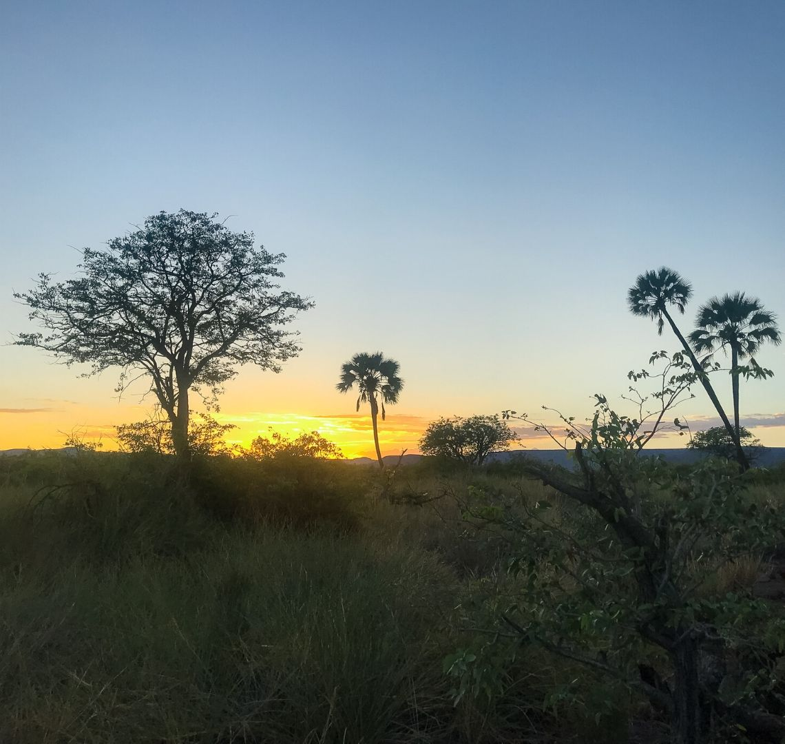 Best travel journals for kids - sunset in Namibia with trees silhouetted against the sky