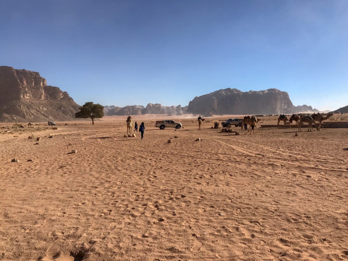 Camels tethered in the middle of Wadi Rum - Jordan Adventures Part 4 - Wadi Rum