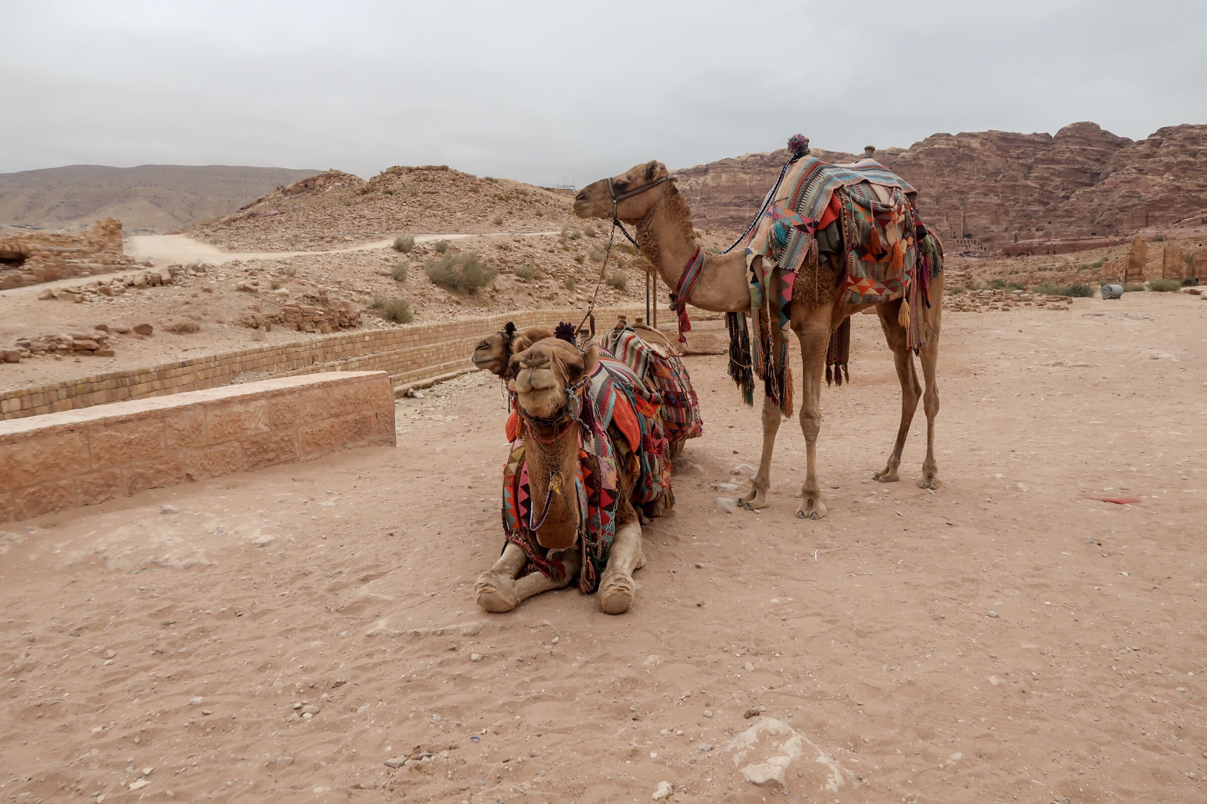 2 camels waiting to take people further into Petra